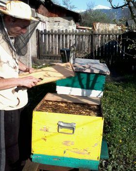 Programul National Apicol - sprijin pentru apicultori